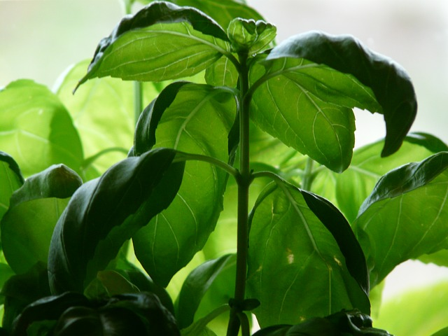 7 Foods that Function as Aphrodisiacs   Michael S Kaplan MD on love plants, aromatic plants, cancer plants, herbal plants, antibiotic plants, antioxidant plants, food plants, energy plants, antimicrobial plants, adaptogen plants, hallucinogenic plants, stimulant plants,
